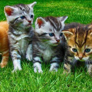 kittens 2641211 960 720 300x300 - 猫好き女子がもっと幸せになれる理由