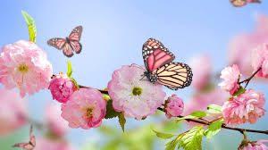 images 1 300x168 - 敏感肌さんじゃなくてもご注意。春の肌荒れ対策